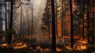 जंगल की आग