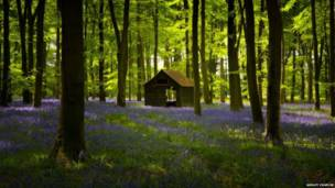 Embley Woods, Hampshire - Ashley Chaplin