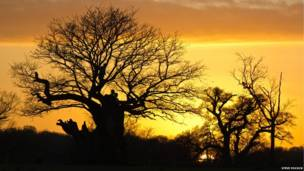 Günbatımı, Richmond Park, Londra - Steve Pocock