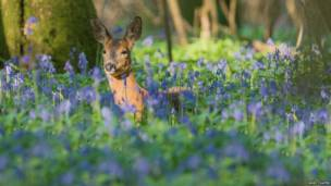 Karaca, Garston Woods, Dorset - Noel Coates