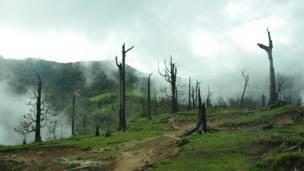 आगलागी प्रभावित लौंठसल्लाको वन