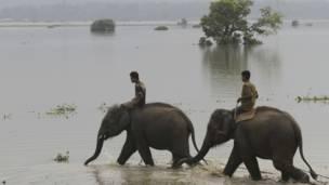 असम, बाढ़, हाथी और महावत