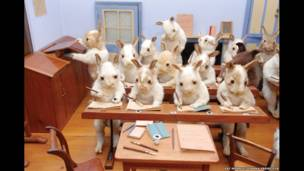 खरगोशों का स्कूल