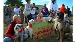 रोमानिया में आवारा कुत्तों के खिलाफ कानून बना