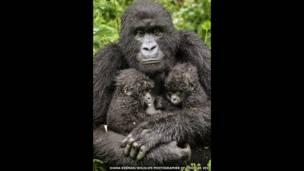 Goril, Diana Rebman