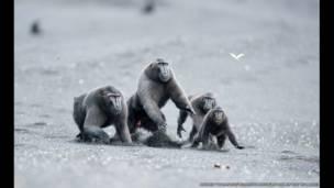 Primatlar, Andrew Walmsley