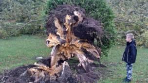 Cậu bé nhìn cây sồi bị đổ. Steve Burrell
