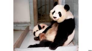 लुन लुन पांडा