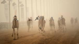 दुबई में ऊँटों की दौड़