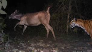 Equipamento consegue flagrar caçadas perigosas, animais raros e pequenos roedores em suas tocas
