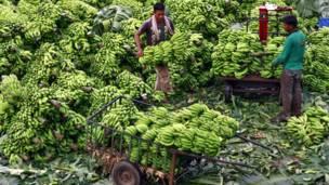 दक्षिण भारत, कोच्चि, केले की खेती