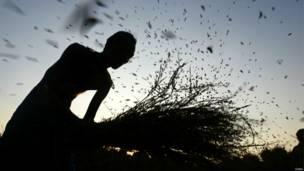 भारत, कृषि प्रधान देश, अर्थव्यवस्था,