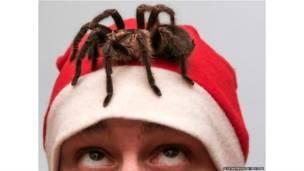 रूस, मकड़ी