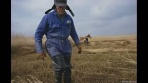 Reed Cutting, Suffolk, 2004. Jason Partyka