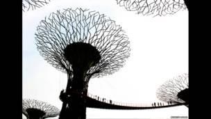 أشجار مصنوعة من الصلب في مشروع الميناء بسنغافورة