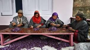 Mulheres extraem tempero da flor de açafrão