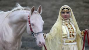 ओमान के सुल्तान के शाही अस्तबल के घोड़े