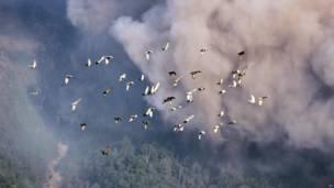 इंडोनेशिया का माउंट सिनाबंग ज्वालामुखी