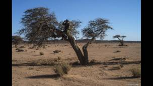 Soldado del Frente Polisario. Foto: Stephen Ferry