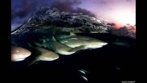 شنای کوسه ها، باهاما، ۲۰۱۰