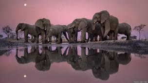 Crepúsculo de los gigantes, 1988. Elefantes en el Delta del Okavango, en Bostuana