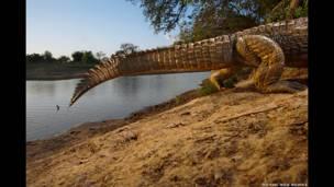 Vanishing monsters 2006; Michael Nichols, Taman Nasional Zakouma, Chad oleh Michael 'Nick' Nichols.