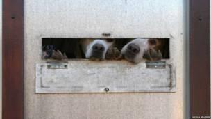 बीबीसी पाठकों की भेजी तस्वीरें, खींचने वाले कुत्ते
