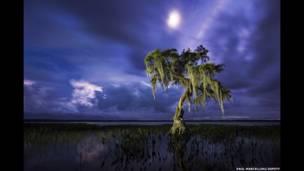 पॉल मार्सेलिनी- एक प्रकाशमान एल्डर वृक्ष