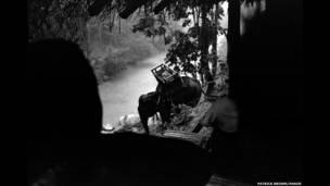 हाथी, थाई बर्मा सीमा