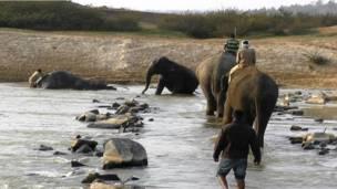 कर्नाटक में हाथियों को पकड़ने का अभियान
