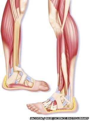Las increíbles extremidades del ser humano: manos y pies - BBC News ...