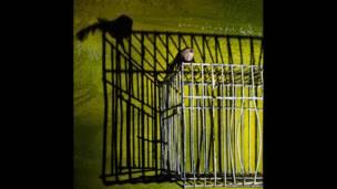 Пташка на клітці