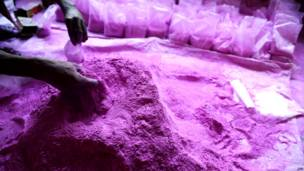 होली का त्योहार, सिलीगुड़ी, गुलाल की तैयारी