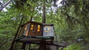Casa en un árbol