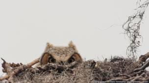 नेशनल ज्योग्राफिक ट्रेवलर फ़ोटो कंटेस्ट, घोसले में बैठा उल्लू