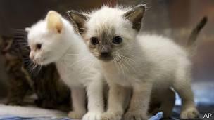 Enfermedad que transmiten los animales a los humanos