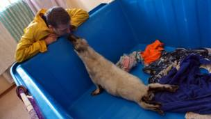 Вячеслав Алексеев с тюленем