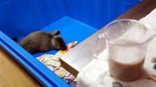 Тюлень в контейнере