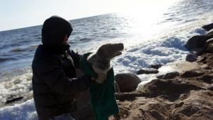 Человек спасает тюленя