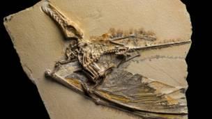 De todos os grandes animais que habitavam a Terra na era dos dinossauros, os pterossauros estão entre os mais incompreendidos.