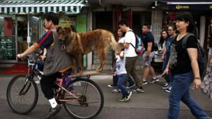 चेंद झाऊ द्विप पर अपने कुत्ते को साइकिल के पीछे बैठाकर ले जाता एक स्थानीय निवासी.