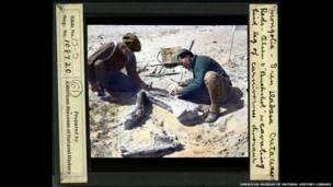 Палеонтологи на раскопках