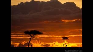 Gün batımında Afrika antilobu. Paul Goldstein / Rex Features