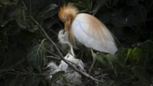 एग्रट, ब्रह्मपुत्र नदी, गुवाहाटी, विश्व पर्यावरण दिवस, पक्षी