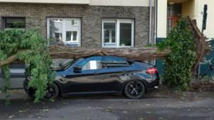 Машина под поваленным деревом