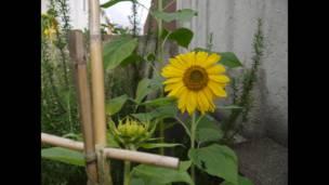 """Foto de una lectora de BBC Mundo por el tema """"jardinería"""""""