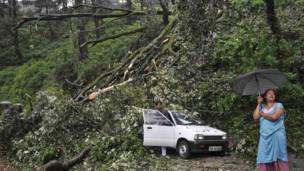 शिमला में बारिश के कारण गिरे पेड़ से दुर्घटनाग्रस्त कार