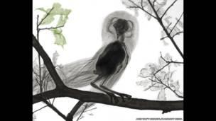 Baykuşun renkli röntgeni. Arie van't Riet / SPL