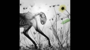 صورة ملونة بالأشعة السينية لهرة وزهور برية