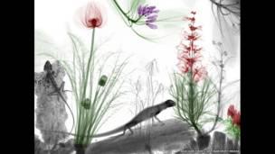 Kertenkeleler ve çiçeklerin renkli röntgeni. Arie van't Riet / SPL